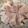 Прикроватный столик Fungos из фактурного спила граба